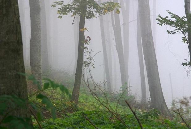 bosco_nebbia